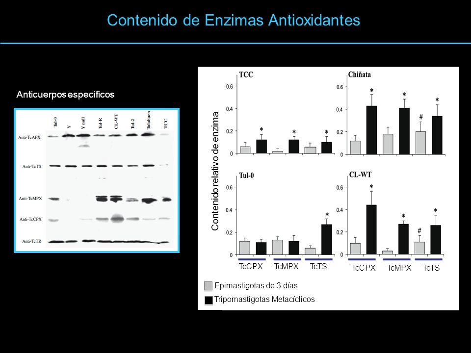 Contenido de Enzimas Antioxidantes Anticuerpos específicos TcCPXTcMPXTcTS TcCPXTcMPXTcTS Contenido relativo de enzima Epimastigotas de 3 días Tripomas
