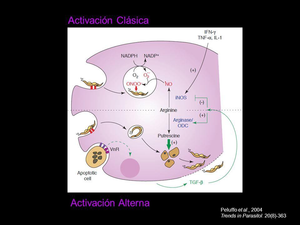 Activación Alterna Activación Clásica Peluffo et al., 2004 Trends in Parasitol. 20(8)-363