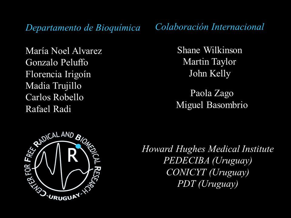 Howard Hughes Medical Institute PEDECIBA (Uruguay) CONICYT (Uruguay) PDT (Uruguay) Departamento de Bioquímica María Noel Alvarez Gonzalo Peluffo Flore