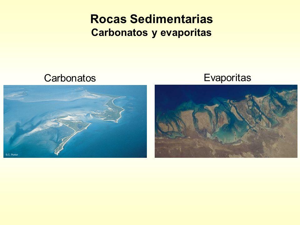 Rocas Sedimentarias Carbonatos y evaporitas Carbonatos Evaporitas