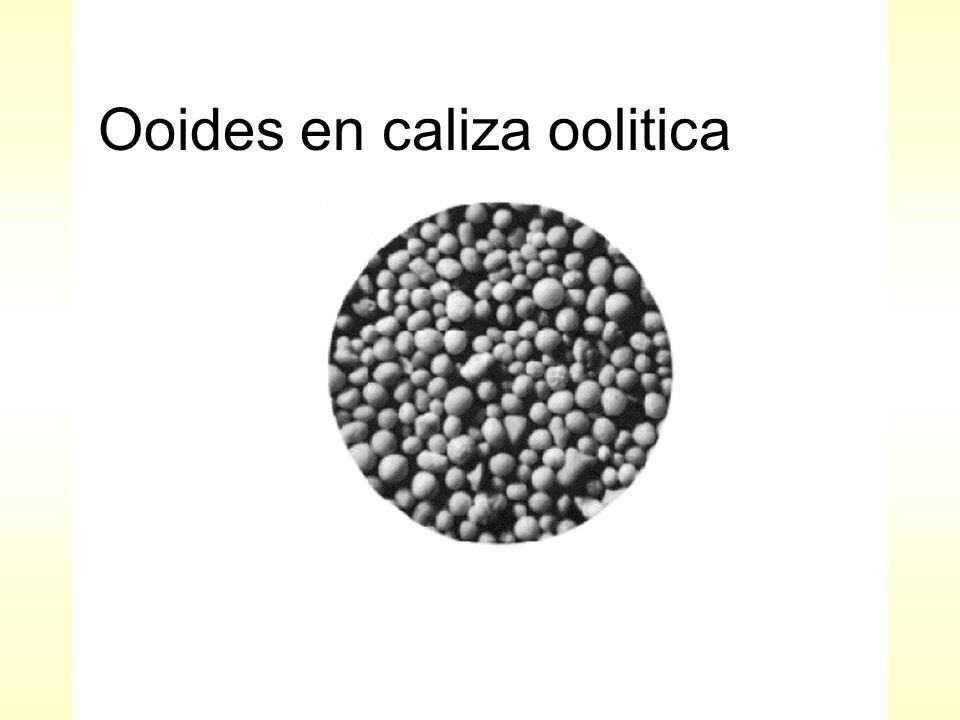 Ooides en caliza oolitica
