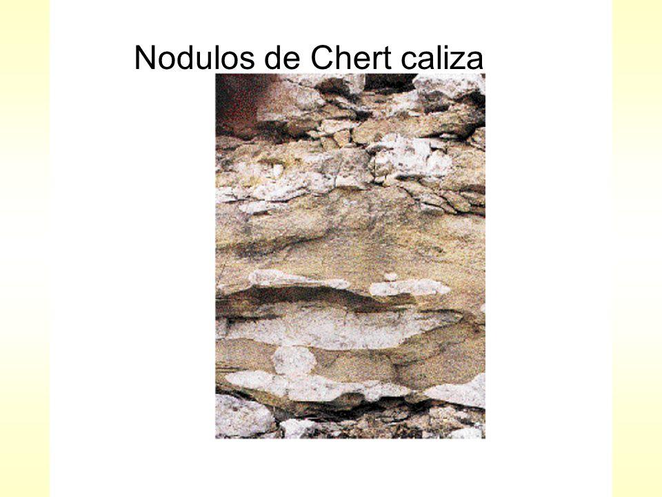 Nodulos de Chert caliza