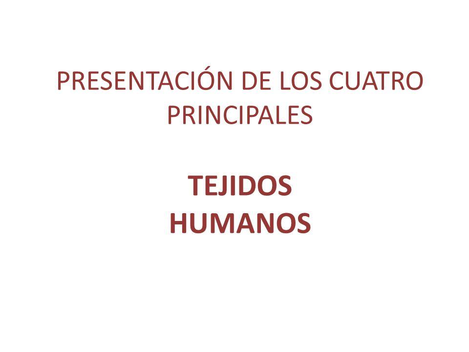 PRESENTACIÓN DE LOS CUATRO PRINCIPALES TEJIDOS HUMANOS