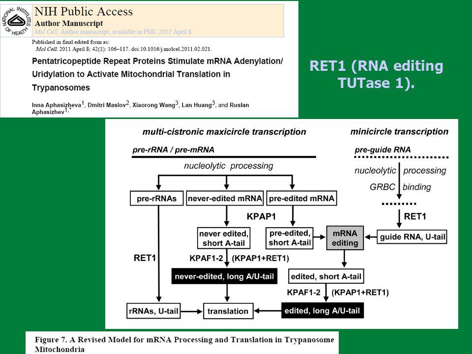RET1 (RNA editing TUTase 1).