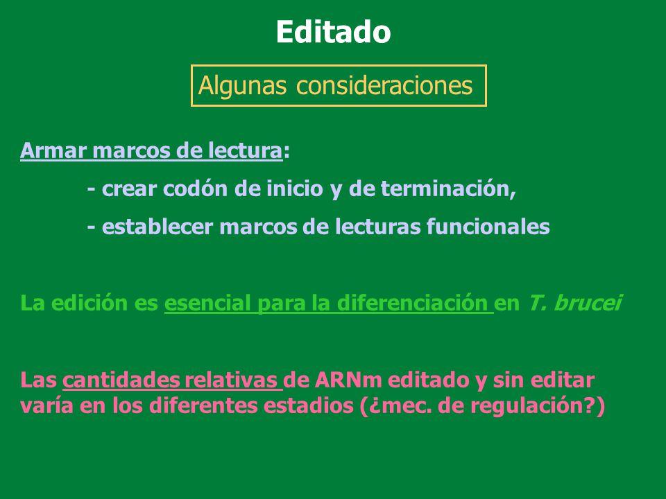 Armar marcos de lectura: - crear codón de inicio y de terminación, - establecer marcos de lecturas funcionales La edición es esencial para la diferenc