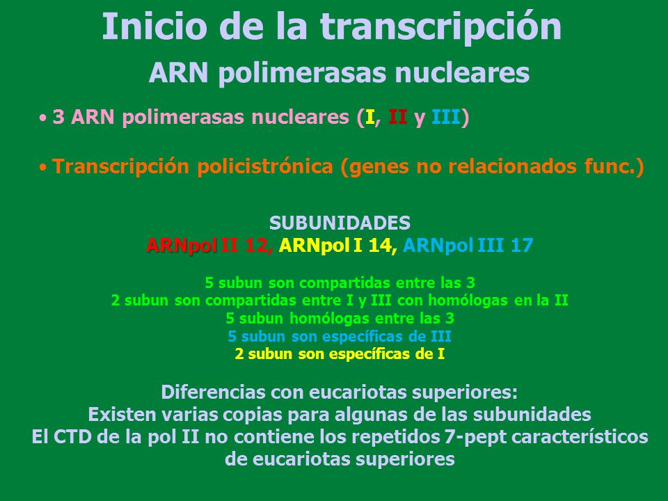 ARN polimerasas nucleares SUBUNIDADES ARNpol ARNpol II 12, ARNpol I 14, ARNpol III 17 5 subun son compartidas entre las 3 2 subun son compartidas entr