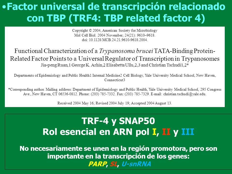 Transcribe ARN pequeños (5S, tARNs, 7SL-ARN y todos snARN) usando snARN Básicamente presenta los mismos promotores que eucariotas superiores: estar tanto en la región 3 como 5 Promotor para ARN-pol III DSE PSE TATA DSE PSE TATA Tipo III AC Tipo I AB Tipo II Punto de inicio ARNr 5S ARNt U2-U6 TSS/Inr T.