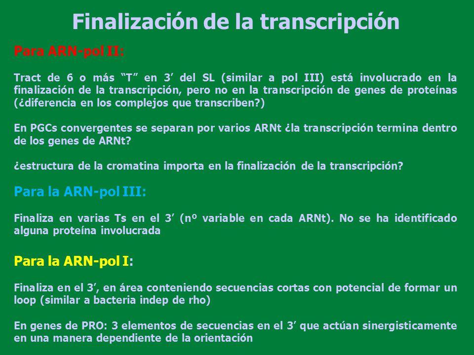 Transcribe: ARN ribosomal (nucleolo) y genes de Ags de superficie (VSG y PRO) ARNr maduro: 20% 5PO4 y 80% 5 OH Promotor parecido de los eucariotas superiores Core promoter Punto de inicio –170 –150 –130 –110 –60 –40 –20 –10 +10 +20 Upstream control element Pol I Promotor para ARN-pol I Dom III (distal) Dom II DomI