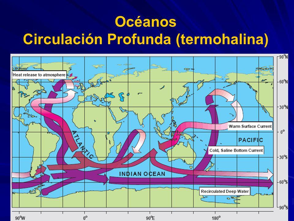 Océanos Circulación Profunda (termohalina)