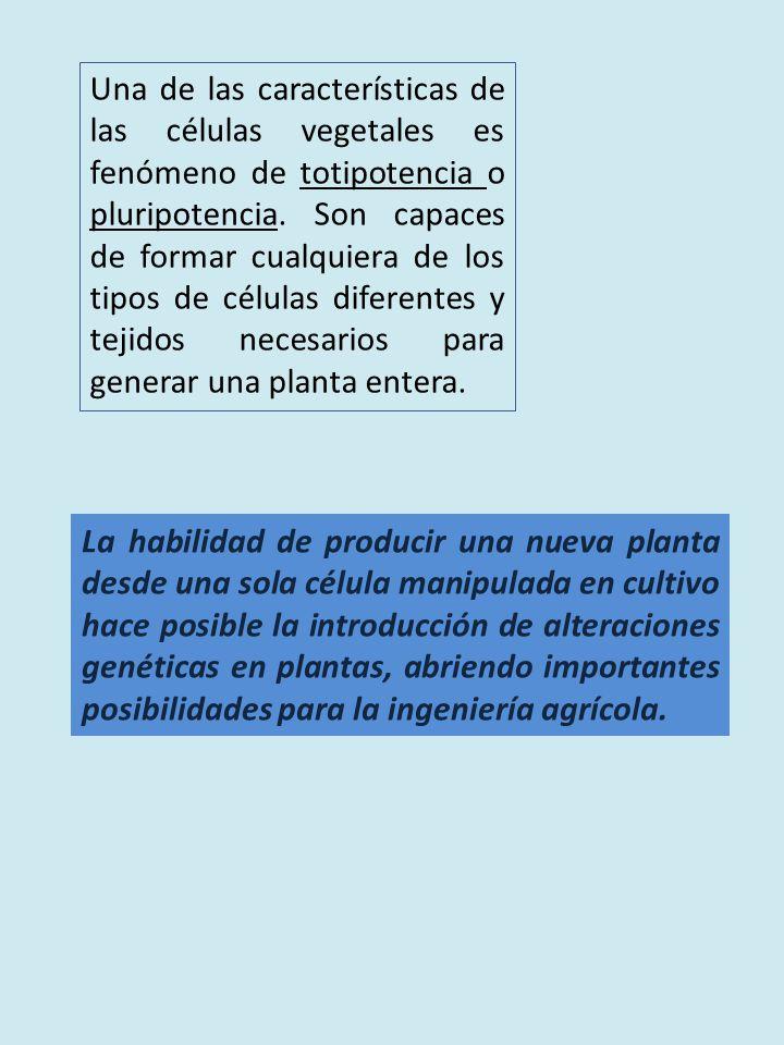 Una de las características de las células vegetales es fenómeno de totipotencia o pluripotencia.