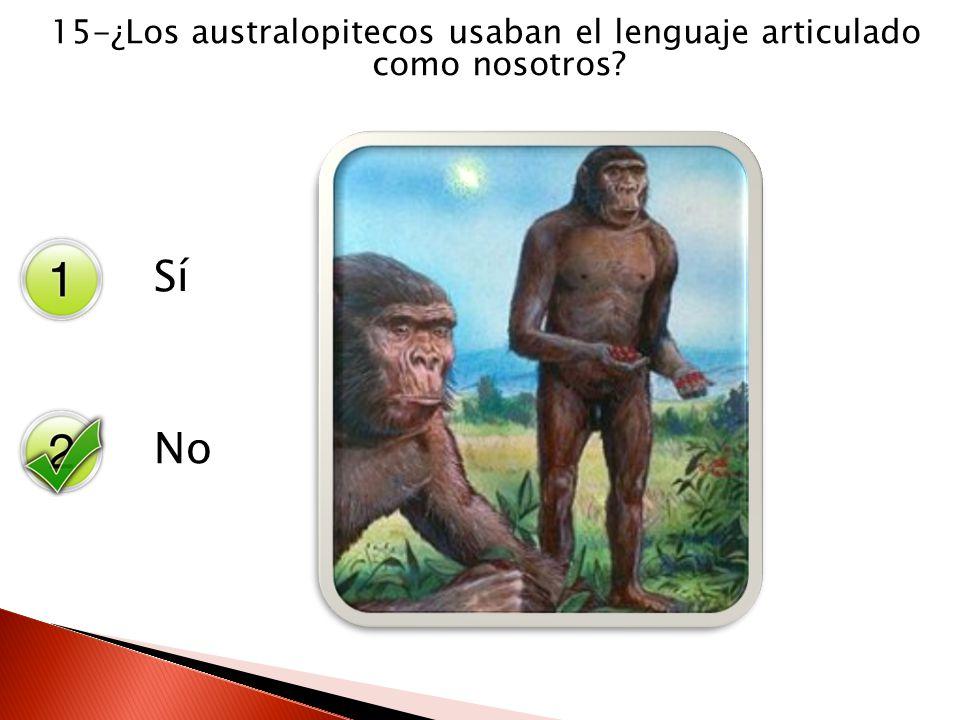 Sí No 15-¿Los australopitecos usaban el lenguaje articulado como nosotros?