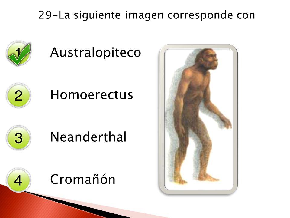 29-La siguiente imagen corresponde con Australopiteco Homoerectus Neanderthal Cromañón