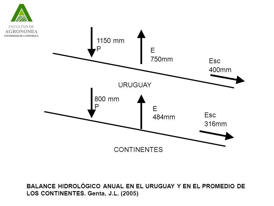 URUGUAY CONTINENTES 1150 mm P E 750mm 800 mm P E 484mm Esc 400mm Esc 316mm BALANCE HIDROLÓGICO ANUAL EN EL URUGUAY Y EN EL PROMEDIO DE LOS CONTINENTES.