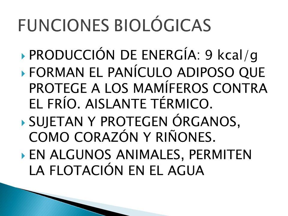 PRODUCCIÓN DE ENERGÍA: 9 kcal/g FORMAN EL PANÍCULO ADIPOSO QUE PROTEGE A LOS MAMÍFEROS CONTRA EL FRÍO. AISLANTE TÉRMICO. SUJETAN Y PROTEGEN ÓRGANOS, C