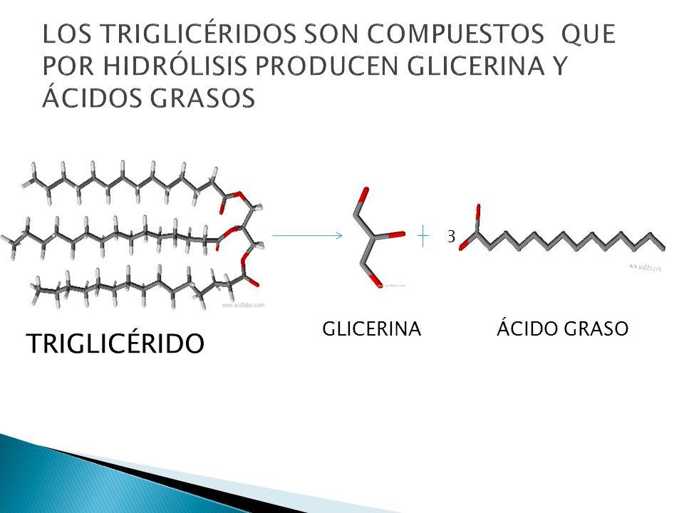 SON ÁCIDOS MONOCARBOXÍLICOS, DE CADENA LARGA Y NÚMERO PAR DE ÁTOMOS DE CARBONO (ENTRE 12 Y 24 ) SE CLASIFICAN EN SON ÁCIDOS MONOCARBOXÍLICOS, DE CADENA LARGA Y NÚMERO PAR DE ÁTOMOS DE CARBONO (ENTRE 12 Y 24 ) SE CLASIFICAN EN SATURADOS : PRESENTAN TODOS ENLACES SIMPLES C-C NO SATURADOS PRESENTAN UNO O MÁS ENLACES DOBLES C-C