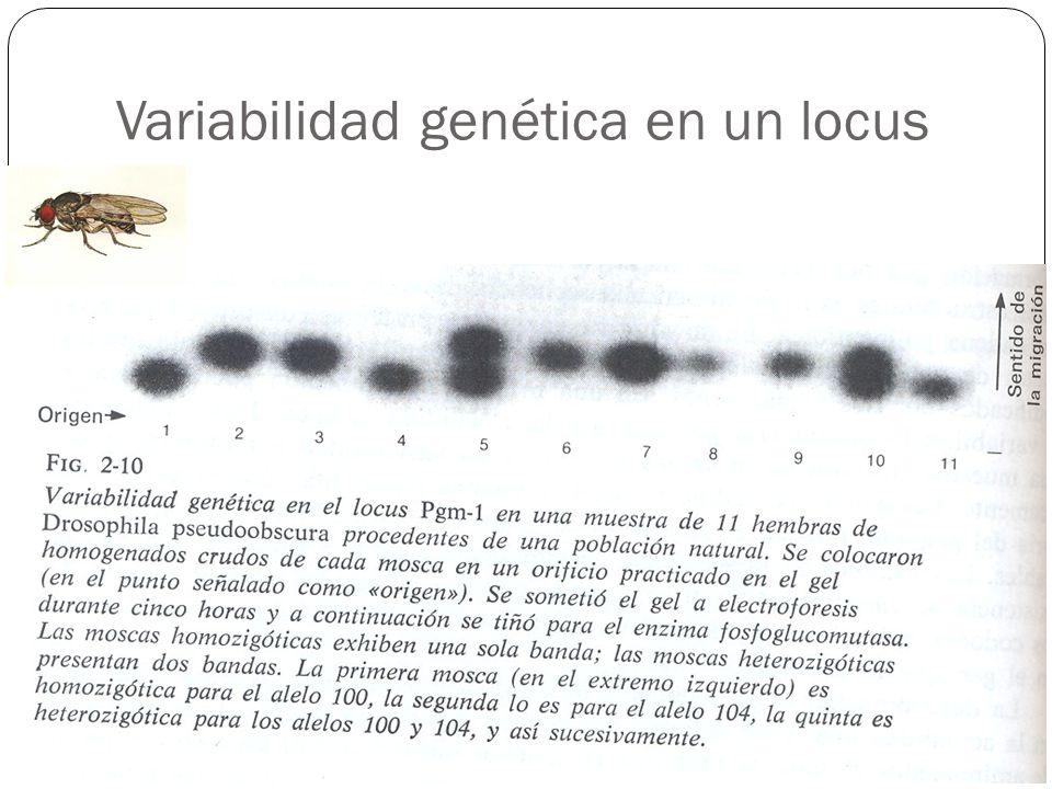 Variabilidad genética en un locus