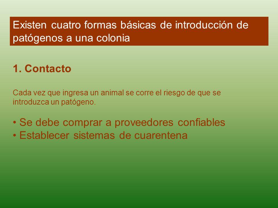 Existen cuatro formas básicas de introducción de patógenos a una colonia 1. Contacto Cada vez que ingresa un animal se corre el riesgo de que se intro