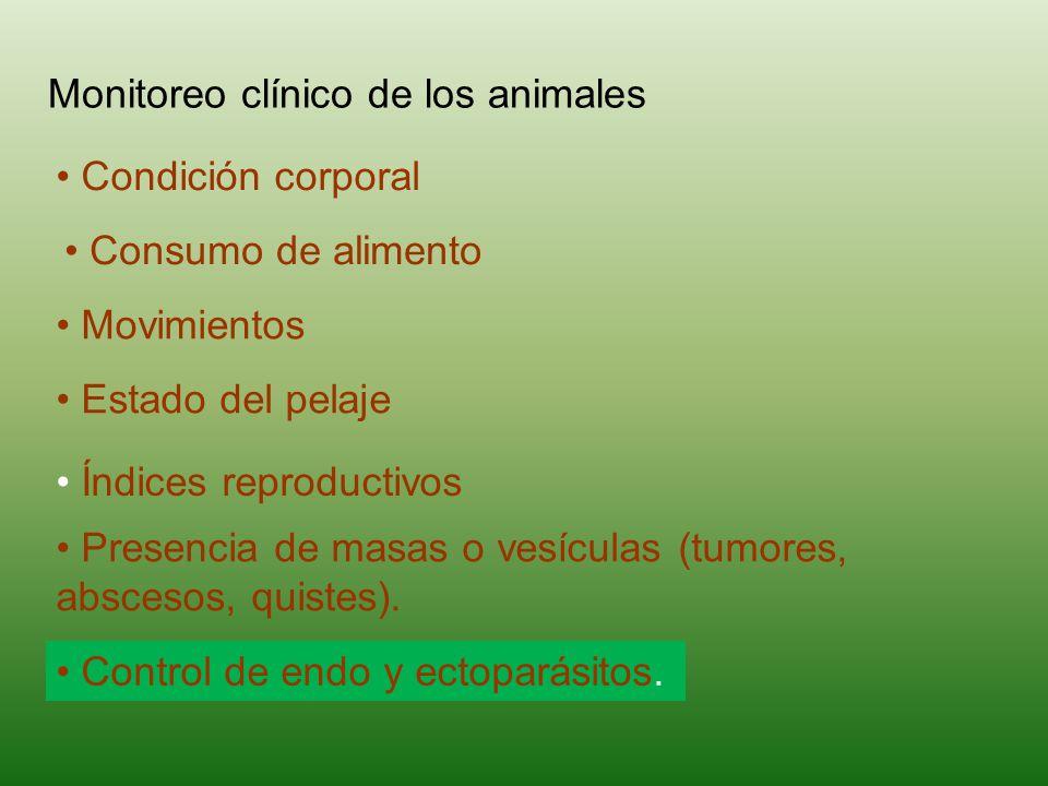 Monitoreo clínico de los animales Condición corporal Presencia de masas o vesículas (tumores, abscesos, quistes).