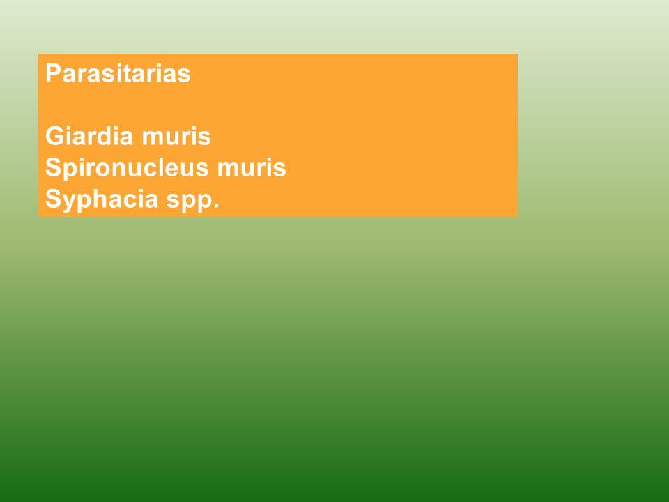 Parasitarias Giardia muris Spironucleus muris Syphacia spp.