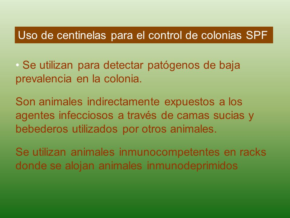 Uso de centinelas para el control de colonias SPF Se utilizan para detectar patógenos de baja prevalencia en la colonia. Son animales indirectamente e