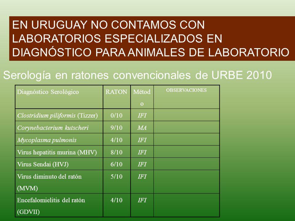 EN URUGUAY NO CONTAMOS CON LABORATORIOS ESPECIALIZADOS EN DIAGNÓSTICO PARA ANIMALES DE LABORATORIO Diagnóstico SerológicoRATON Métod o OBSERVACIONES C