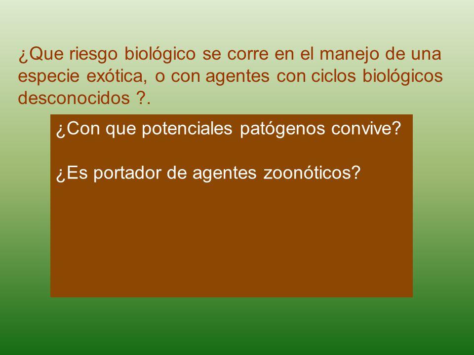 ¿Que riesgo biológico se corre en el manejo de una especie exótica, o con agentes con ciclos biológicos desconocidos ?.