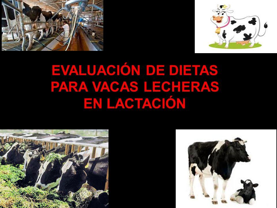 EVALUACIÓN DE DIETAS PARA VACAS LECHERAS EN LACTACIÓN 1
