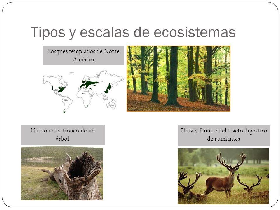 Control de la biodiversidad de un ecosistema Bottom -up Top - down