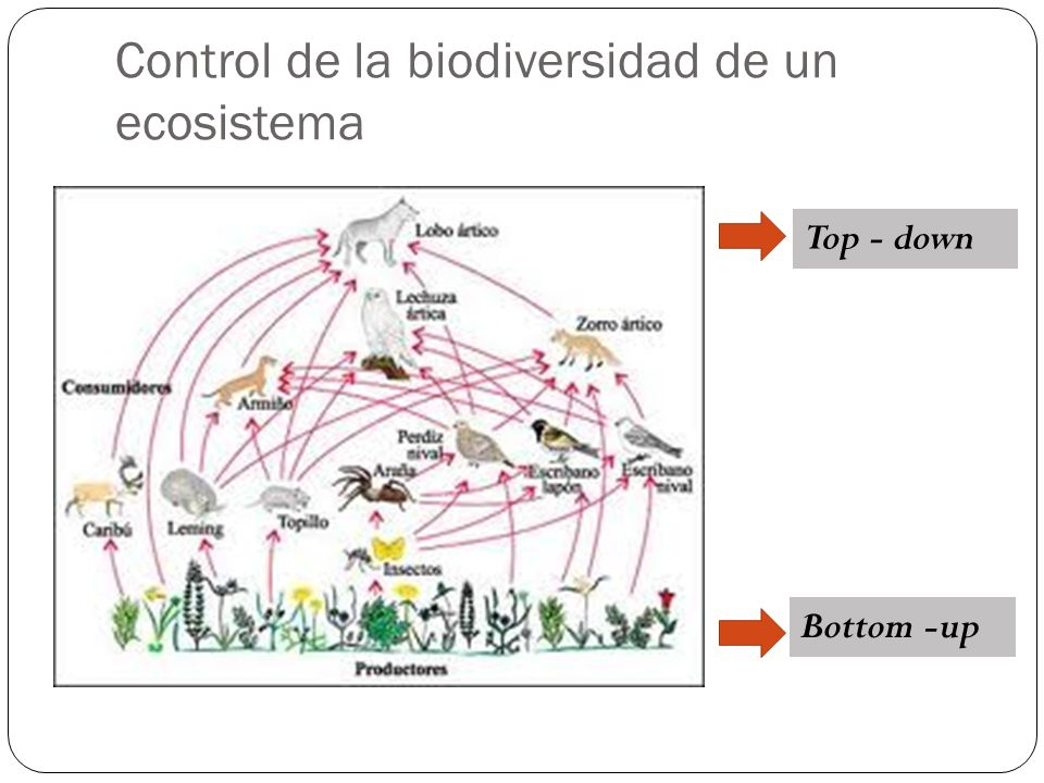 Control de la biodiversidad de un ecosistema Bottom -up Top - down