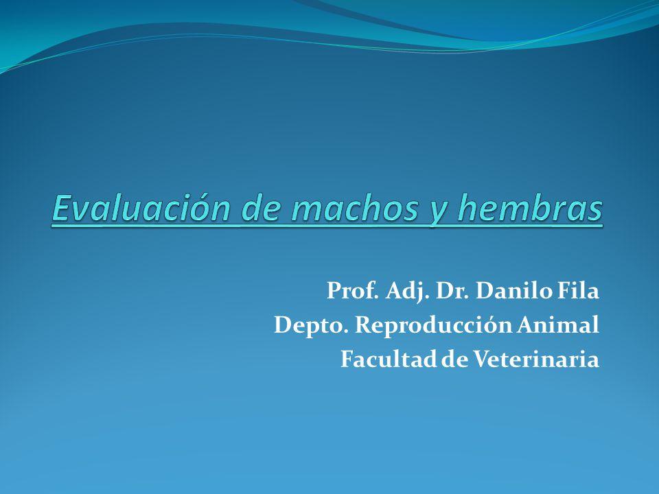 Prof. Adj. Dr. Danilo Fila Depto. Reproducción Animal Facultad de Veterinaria