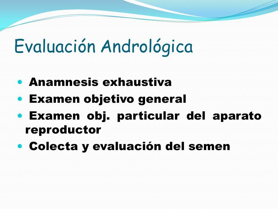 Evaluación Andrológica Anamnesis exhaustiva Examen objetivo general Examen obj.