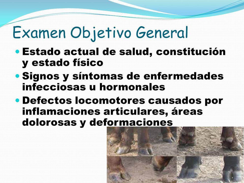 Examen Objetivo General Estado actual de salud, constitución y estado físico Signos y síntomas de enfermedades infecciosas u hormonales Defectos locom