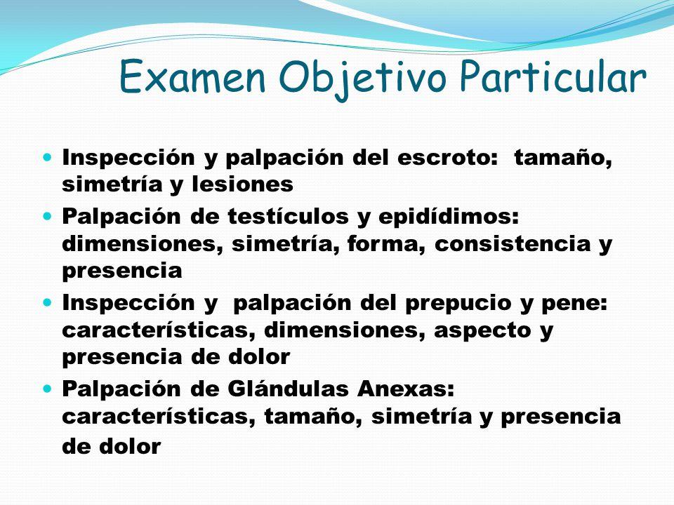 Examen Objetivo Particular Inspección y palpación del escroto: tamaño, simetría y lesiones Palpación de testículos y epidídimos: dimensiones, simetría