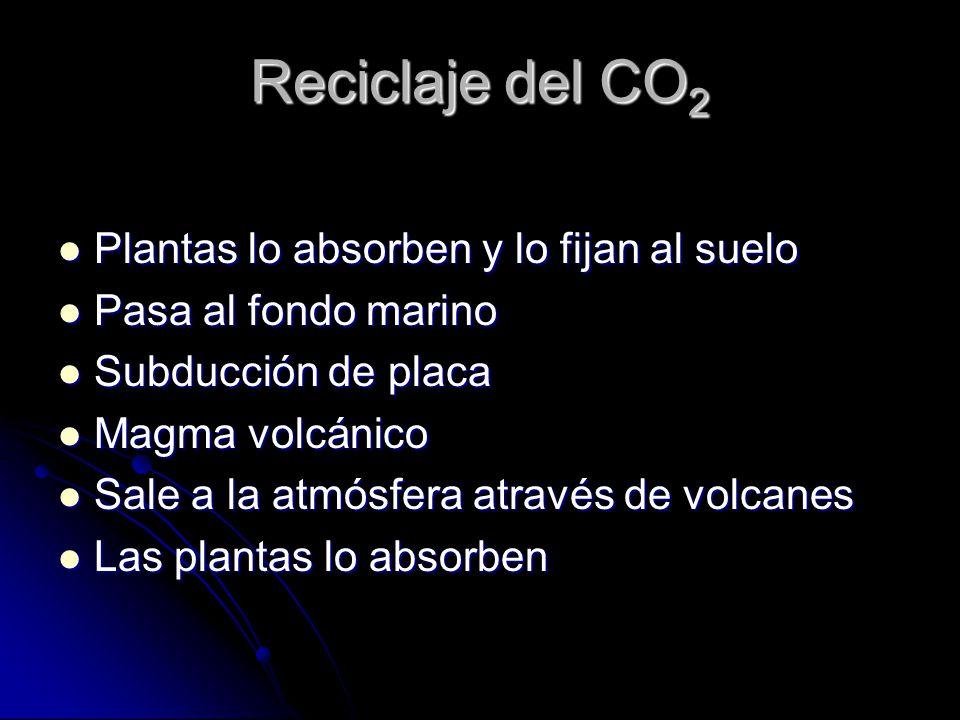 Reciclaje del CO 2 Plantas lo absorben y lo fijan al suelo Plantas lo absorben y lo fijan al suelo Pasa al fondo marino Pasa al fondo marino Subducció