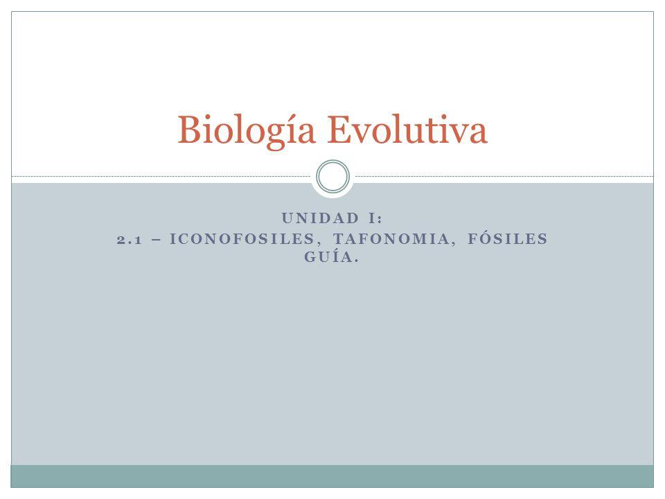 Biología Evolutiva UNIDAD I: 2.1 – ICONOFOSILES, TAFONOMIA, FÓSILES GUÍA.