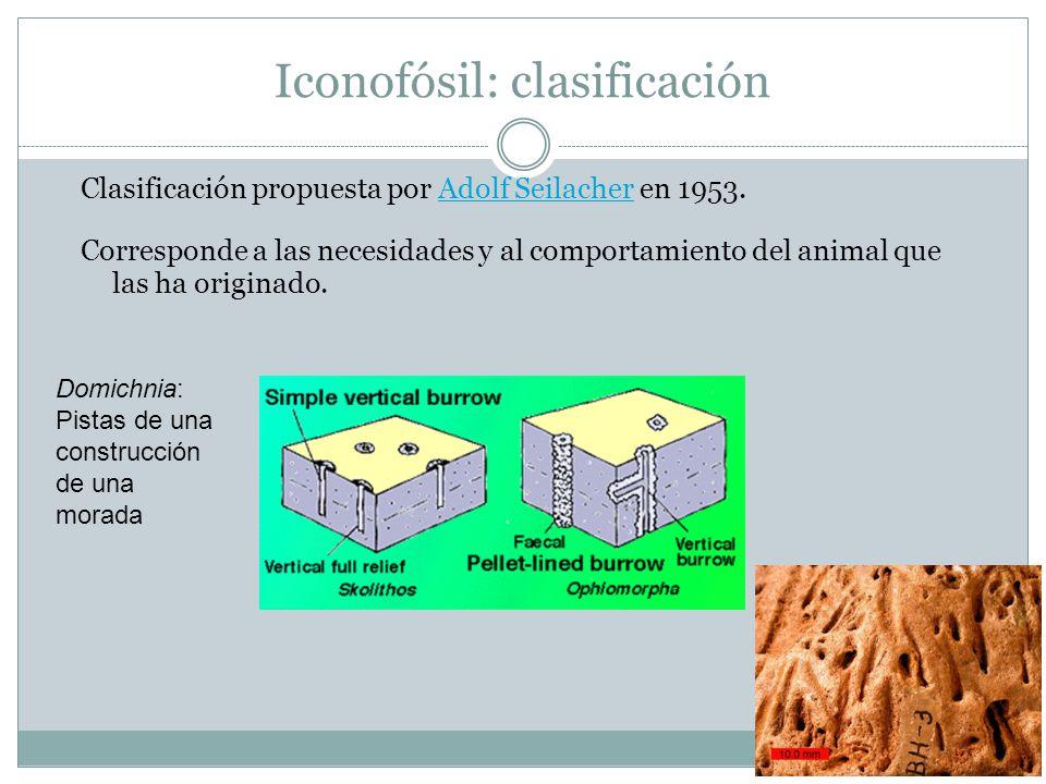 Iconofósil: clasificación Clasificación propuesta por Adolf Seilacher en 1953.Adolf Seilacher Corresponde a las necesidades y al comportamiento del animal que las ha originado.