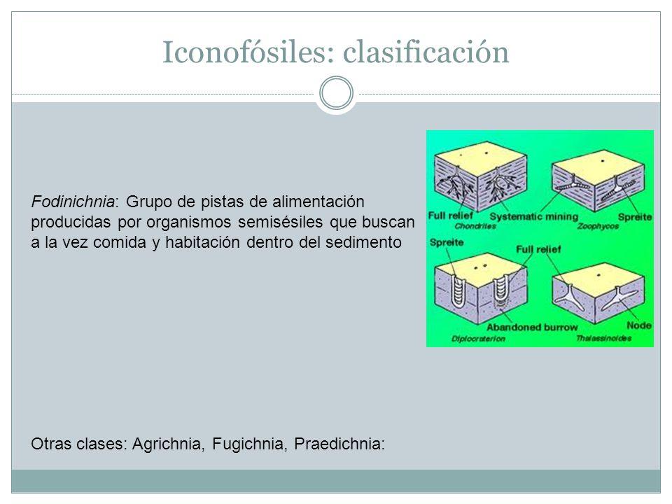 Iconofósiles: clasificación Fodinichnia: Grupo de pistas de alimentación producidas por organismos semisésiles que buscan a la vez comida y habitación dentro del sedimento Otras clases: Agrichnia, Fugichnia, Praedichnia: