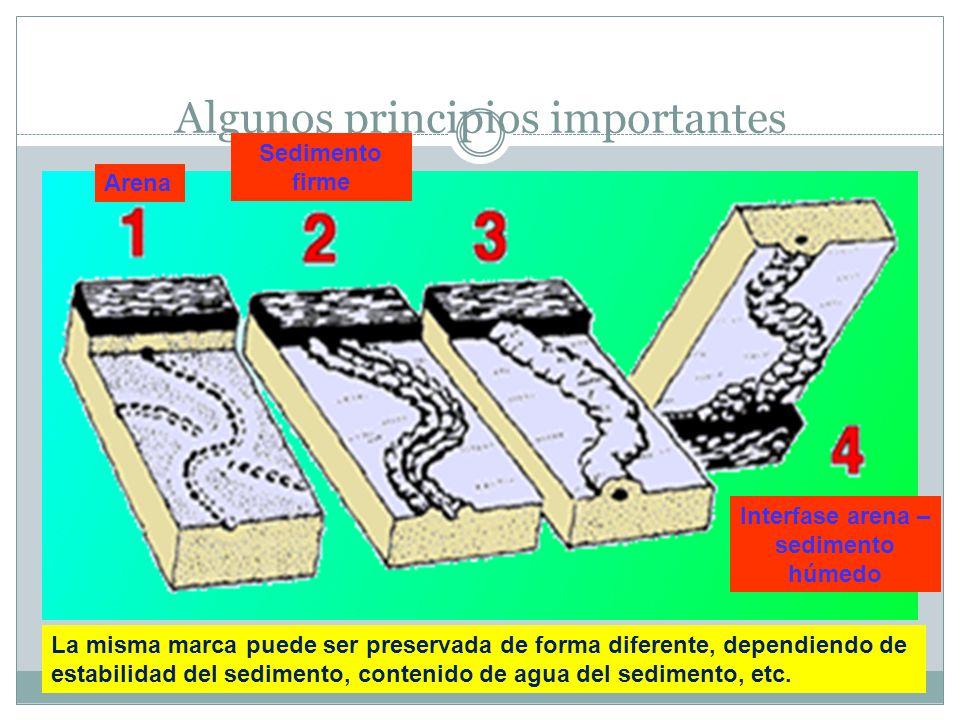 Algunos principios importantes La misma marca puede ser preservada de forma diferente, dependiendo de estabilidad del sedimento, contenido de agua del sedimento, etc.