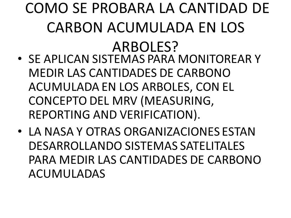 COMO SE PROBARA LA CANTIDAD DE CARBON ACUMULADA EN LOS ARBOLES? SE APLICAN SISTEMAS PARA MONITOREAR Y MEDIR LAS CANTIDADES DE CARBONO ACUMULADA EN LOS