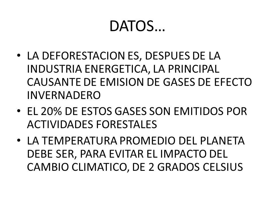 DATOS… LA DEFORESTACION ES, DESPUES DE LA INDUSTRIA ENERGETICA, LA PRINCIPAL CAUSANTE DE EMISION DE GASES DE EFECTO INVERNADERO EL 20% DE ESTOS GASES
