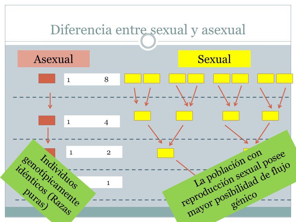Diferencia entre sexual y asexual 1 8 1 4 1 2 1 AsexualSexual La población con reproducción sexual posee mayor posibilidad de flujo génico Individuos genotípicamente idénticos (Razas puras)