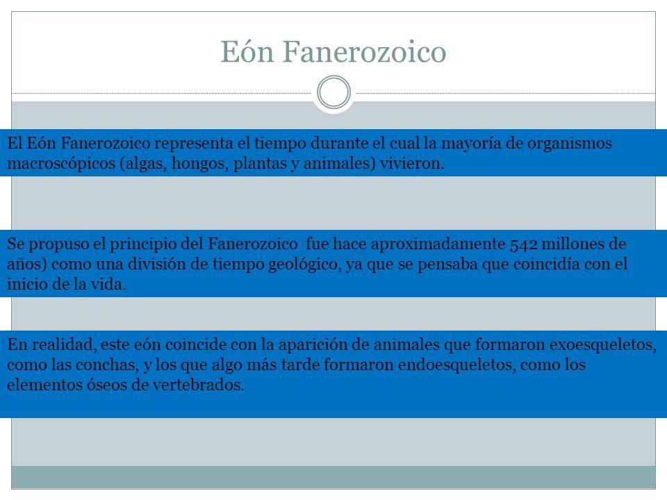 Eón Fanerozoico El Eón Fanerozoico representa el tiempo durante el cual la mayoría de organismos macroscópicos (algas, hongos, plantas y animales) vivieron.