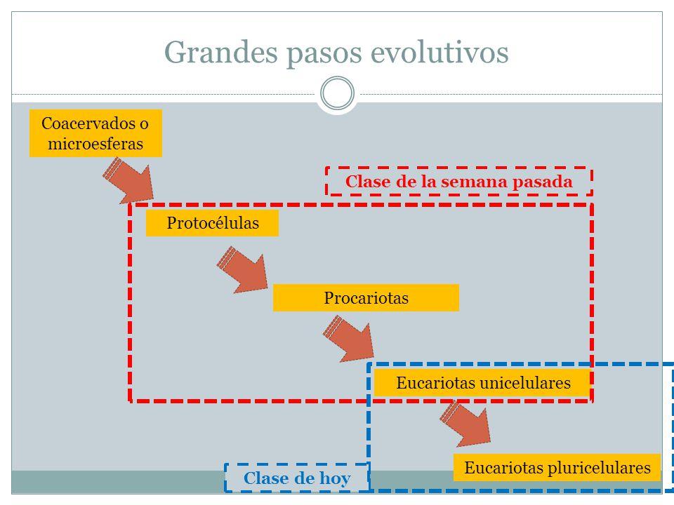 Resumen de la clase pasada Radiación adaptativa de procariotas Aparición del O2 y la fotosíntesis / generación de la atmósfera Tipos de metabolismos primitivos: autotrófos/ heterotrófos Teoría endosimbiótica y aparición de los eucariotas (mitocondrias y cloroplastos)