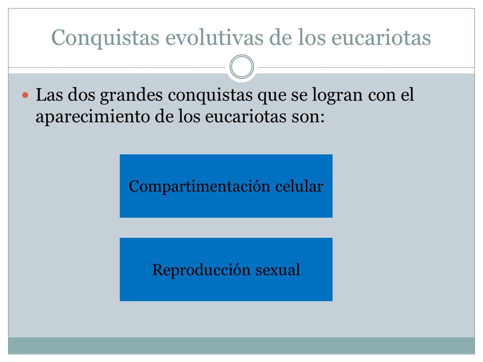 Conquistas evolutivas de los eucariotas Las dos grandes conquistas que se logran con el aparecimiento de los eucariotas son: Reproducción sexual Compartimentación celular