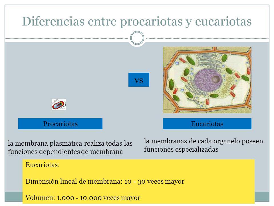Diferencias entre procariotas y eucariotas ProcariotasEucariotas la membrana plasmática realiza todas las funciones dependientes de membrana la membranas de cada organelo poseen funciones especializadas Eucariotas: Dimensión lineal de membrana: 10 - 30 veces mayor Volumen: 1.000 - 10.000 veces mayor vs