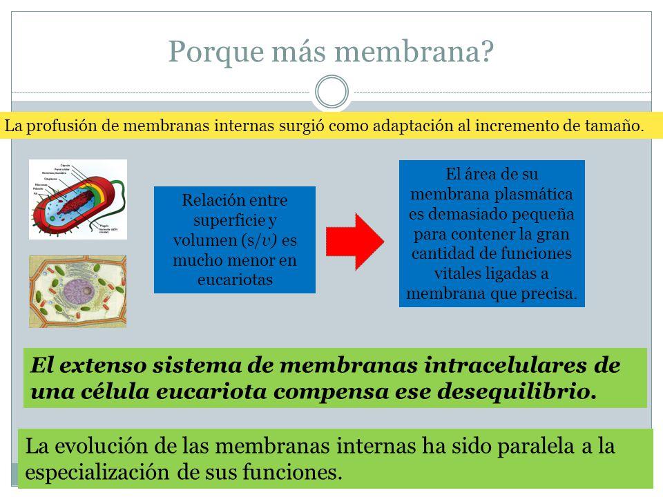 Porque más membrana? La profusión de membranas internas surgió como adaptación al incremento de tamaño. El extenso sistema de membranas intracelulares