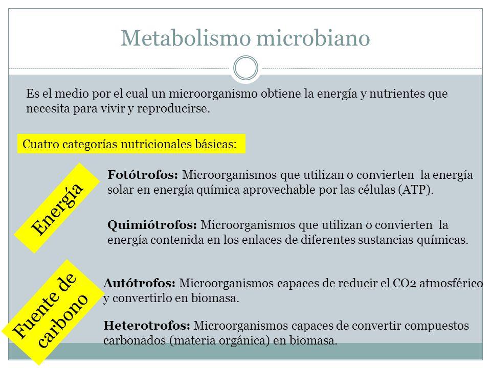 Metabolismo microbiano Es el medio por el cual un microorganismo obtiene la energía y nutrientes que necesita para vivir y reproducirse. Cuatro catego