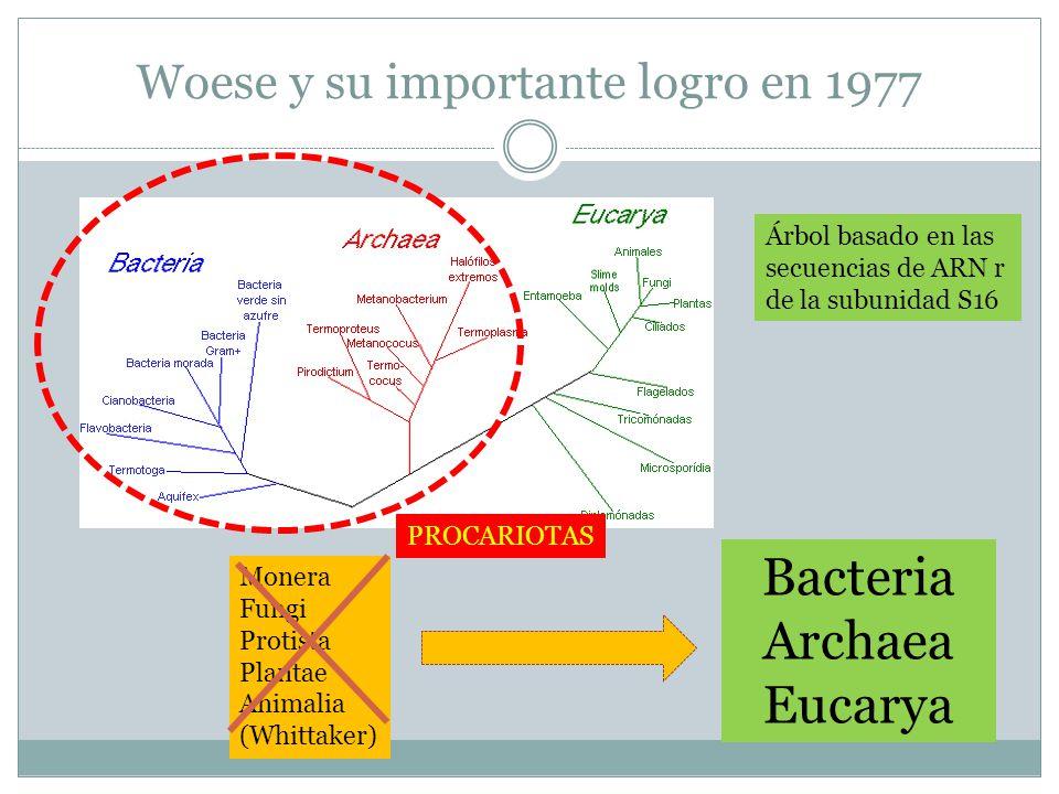 Woese y su importante logro en 1977 Monera Fungi Protista Plantae Animalia (Whittaker) Bacteria Archaea Eucarya Árbol basado en las secuencias de ARN r de la subunidad S16 PROCARIOTAS