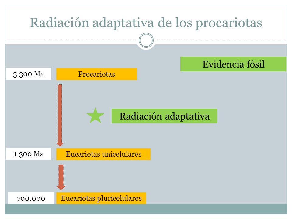 Radiación adaptativa de los procariotas Procariotas Eucariotas pluricelulares Eucariotas unicelulares Evidencia fósil 3.300 Ma 700.000 1.300 Ma Radiación adaptativa