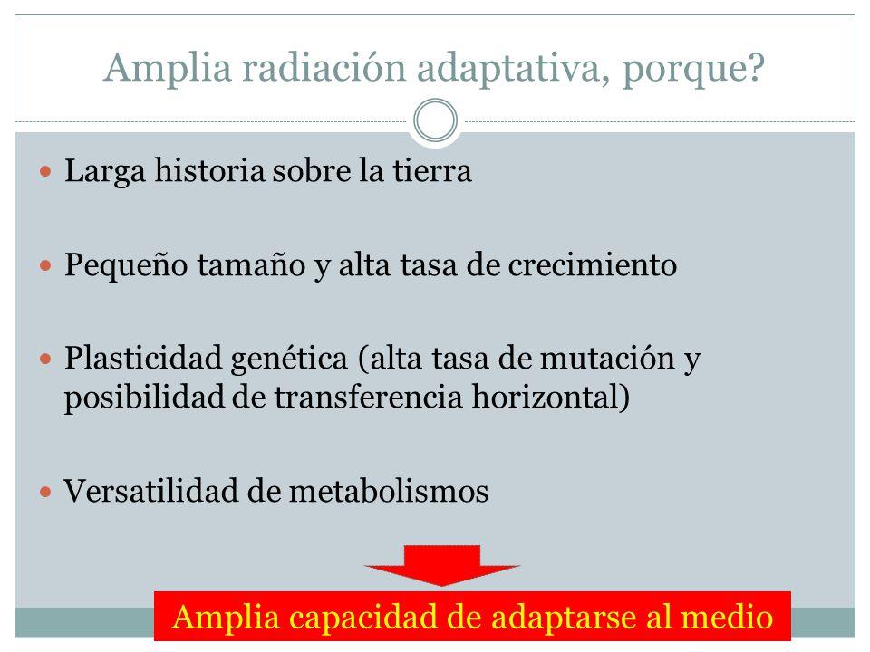 Amplia radiación adaptativa, porque? Larga historia sobre la tierra Pequeño tamaño y alta tasa de crecimiento Plasticidad genética (alta tasa de mutac
